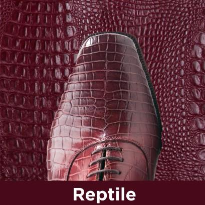 Buy Reptile Care